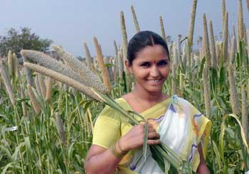 Image result for millet india