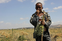 Higher yielding and drought-tolerant chickpea varieties are helping Ethiopia