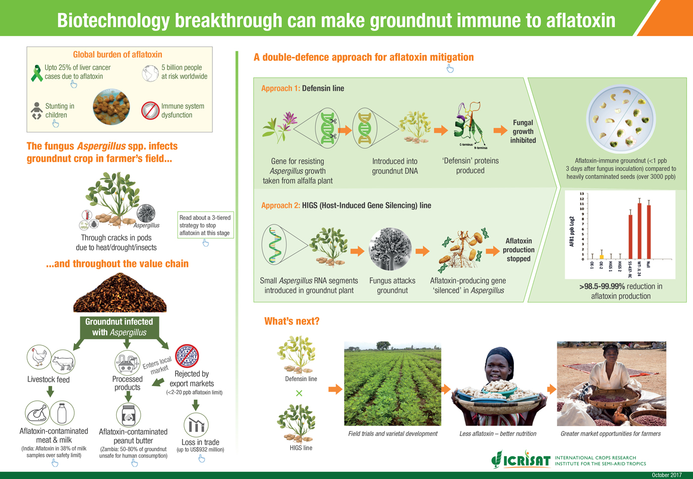 Biotechnology breakthrough can make groundnut immune to aflatoxin