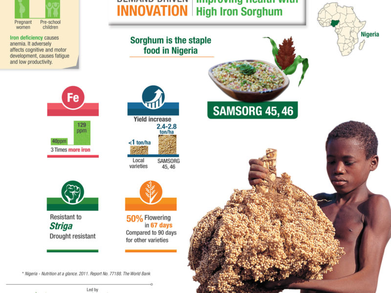 Improving Health with High Iron Sorghum