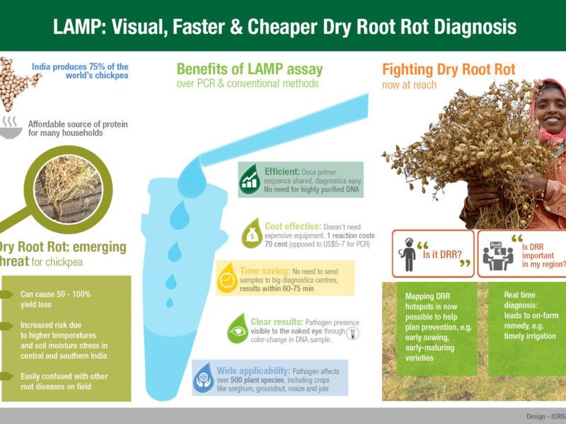 LAMP: Visual, faster & Cheaper Dry Root Rot Diagnosis