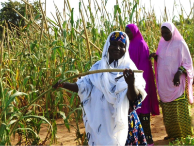 Women farmers examine an improved pearl millet variety.