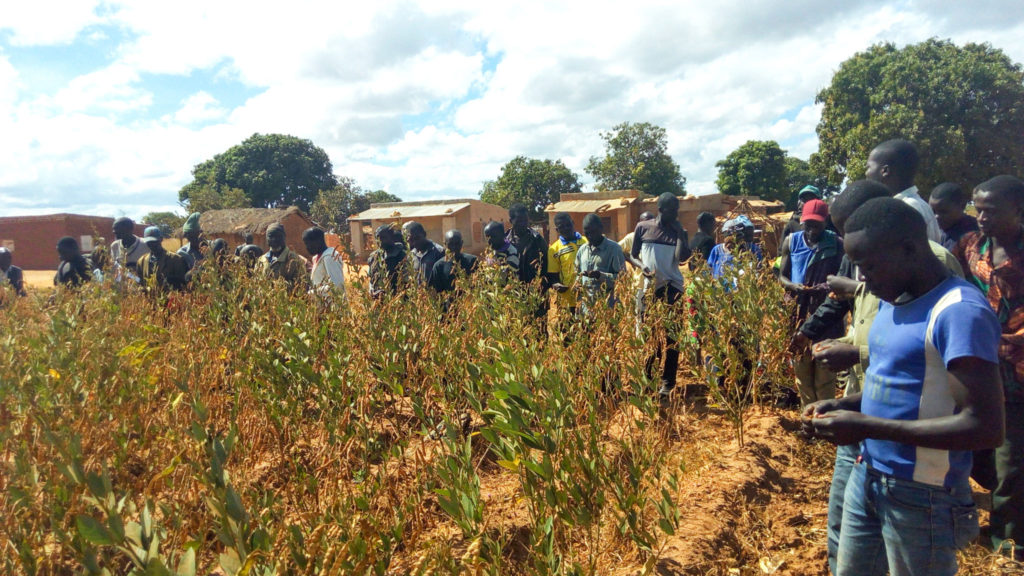 Farmers conducting participatory variety selection in Lundazi district in Zambia (Inset) ICEAP 00554. Photo: ICRISAT