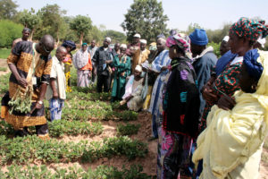 Farmers visiting a groundnut field.