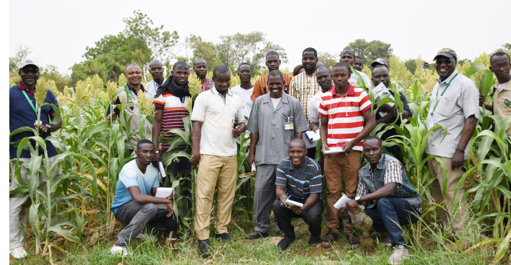 "Young agricultural technicians of MyAgro visit ""Soubatimi"", multipurpose sweet sorghum variety seed production plot in off season. Photo: A Diama, ICRISAT"
