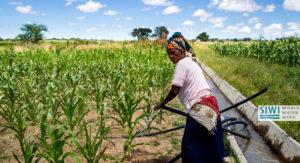 A farmer uses the Silalatshani Irrigation Scheme in Zimbabwe. Andre Van Rooyen/ICRISAT