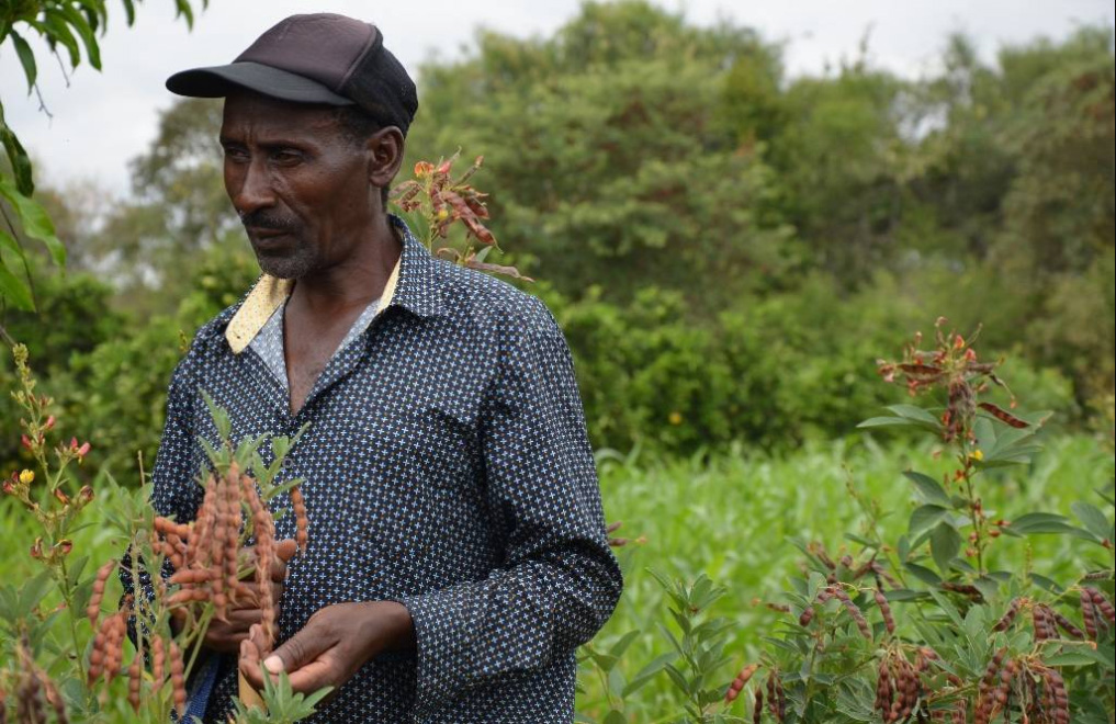 Samuel Nduvi in Kikumini, Kenya has been growing drought tolerant sorghum intercropped with protein-rich legumes like pigeonpea and cowpea over the last three years. Photo: Alina Paul-Bossuet