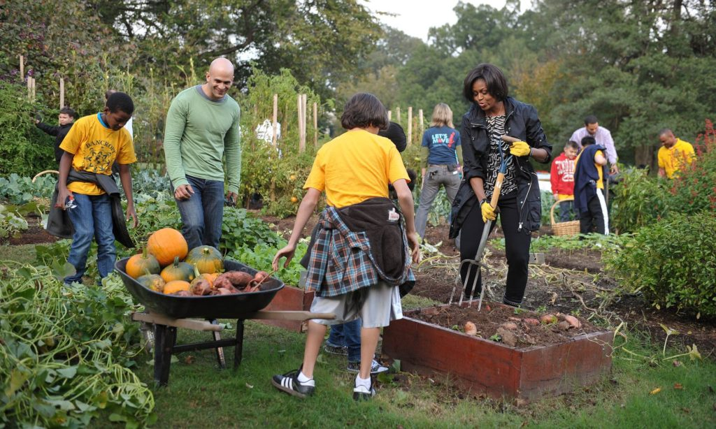 Michelle Obama and White House chef Sam Kass (in green) digging for sweet potatoes in the White House kitchen garden in 2010. Photograph: Mandel Ngan/AFP/Getty
