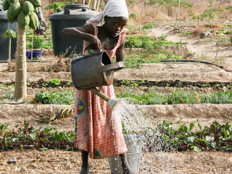 Small-scale irrigation. Photo for representational purpose only.