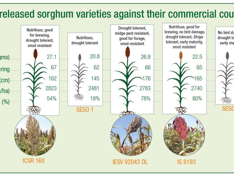 NaSSARI-released sorghum varieties against their commercial counterparts