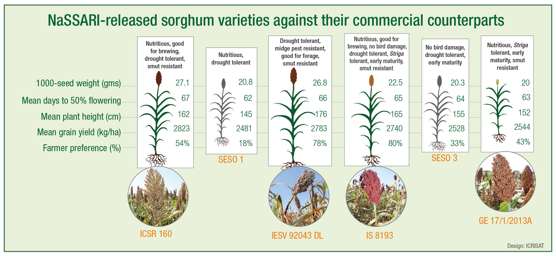 NaSSARI-released sorghum varieties against their commercial counterparts