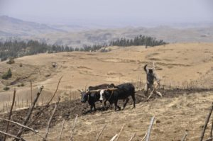 Farming in the harsh landscape of Yewol