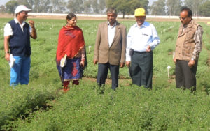 Dr Pooran M Gaur, Theme Leader – Crop Improvement, Asia Program, ICRISAT, (second from right) with (L to R) Drs M Yasin, Priyanka Joshi, RP Singh, and DR Saxena – observing machine harvestable chickpea variety RVG 204 at Sehore. Photo: RVSKVV