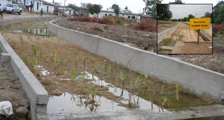 Constructed wetland at Kothapally village in India. Treated household wastewater used to irrigate one hectare farm land.