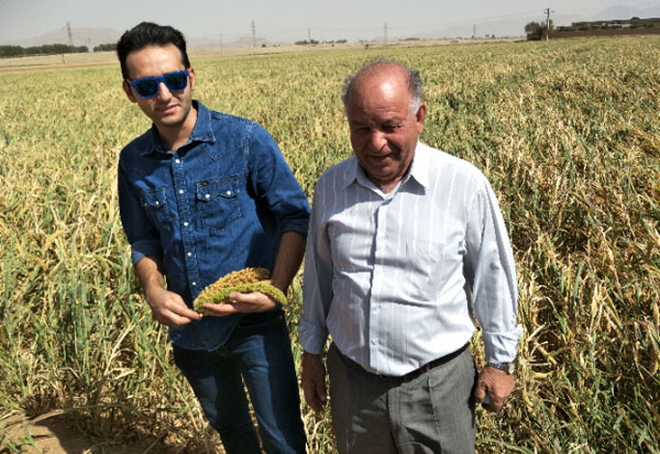 Farmer Maleki and his son now grow foxtail and proso millet on their fields. Photo: ICRISAT