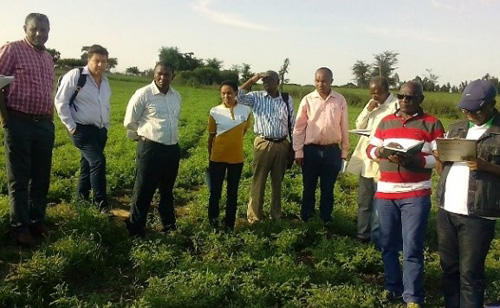 Agricultural experts and FAO officials on a field tour. Photo: S Gelelcha, FAO, Ethiopia