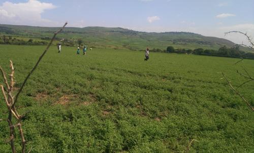 A QDS production cluster near a Addis Ababa, Ethiopia. Photo: Asnake Fikre