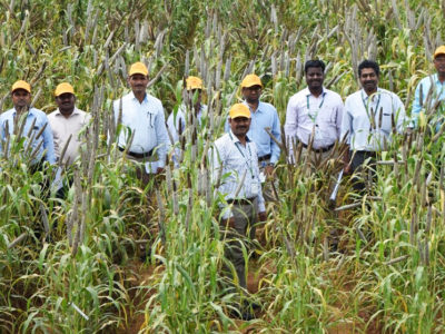 Participants at the workshop select advanced pearl millet hybrids for upscaling in 2018. Photo: ICRISAT
