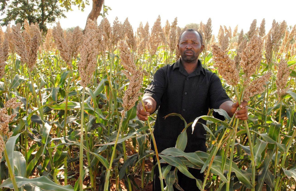 Mr Jackson Ramadhani in his farm in Nkungi Village, Iramba District, Tanzania. Photo: C. Wangari, ICRISAT