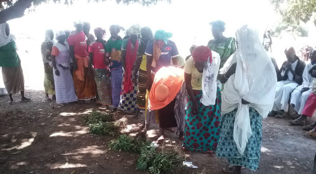 Women choosing groundnut varieties at Leo, Burkina Faso. Photo: Dr Amos Miningou, INERA