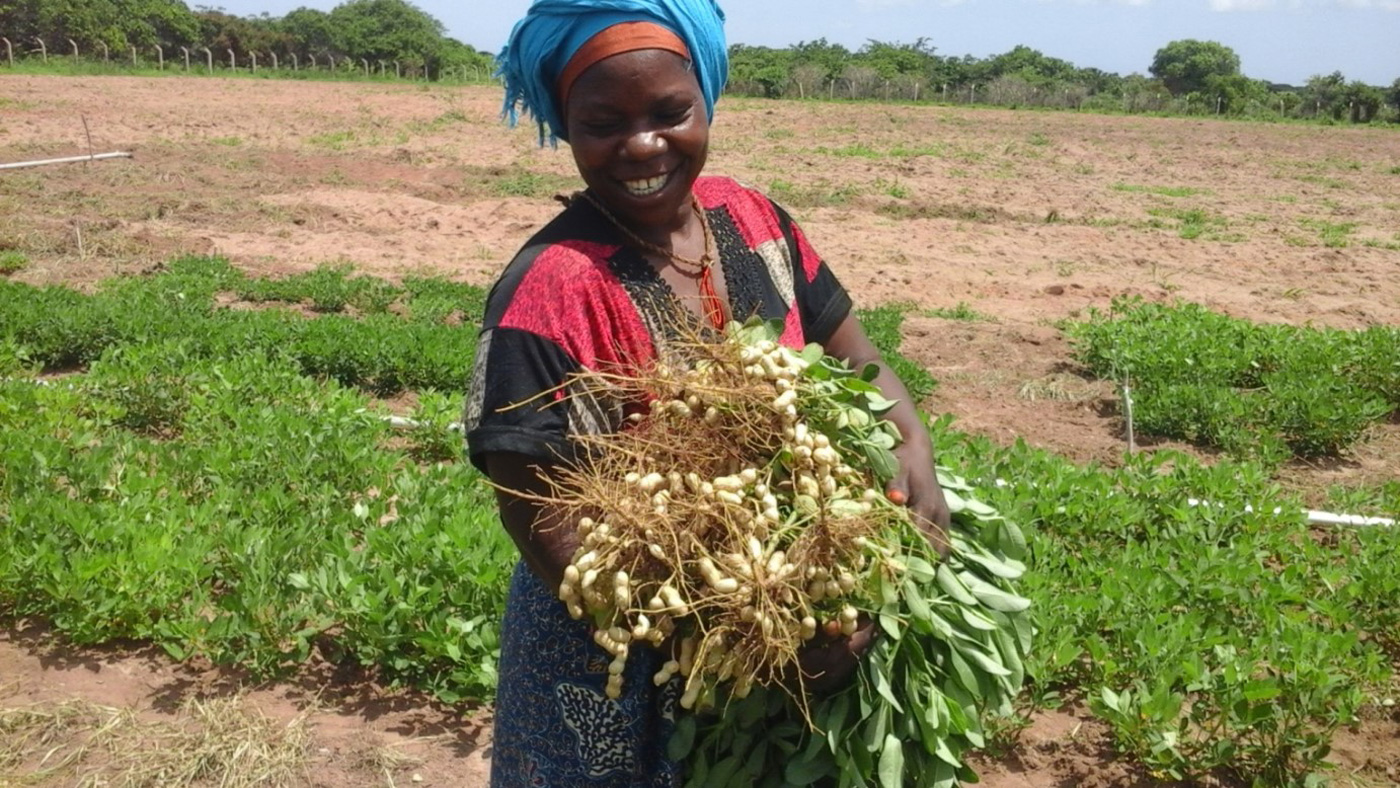 A farmer amazed to see yield of Pendo at ARI, Naliendele, Photos: Charles Mkandawile