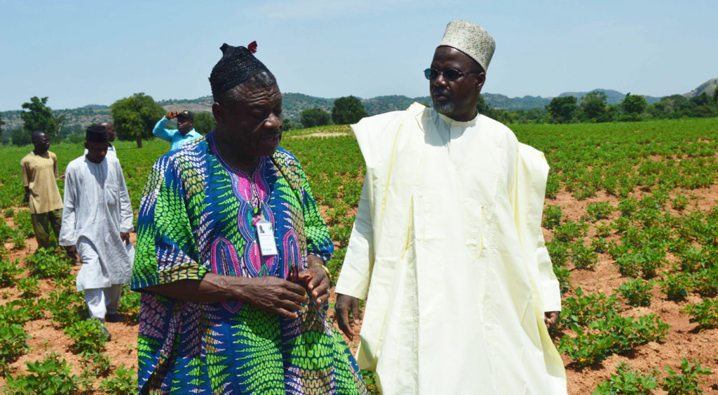 TL-III Professor Sanusi Gaya (right) and Dr. Michael Vabi, USAID Country Project Manager, visit seed production plots in Kano State. Photo Credit: Lawal Bawal, USAID