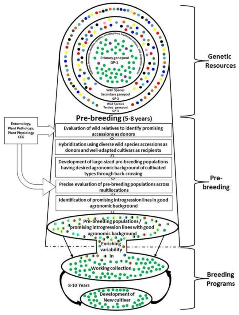 Pre-breeding: a link between genebanks and plant improvement programs (Sharma 2017:1136)
