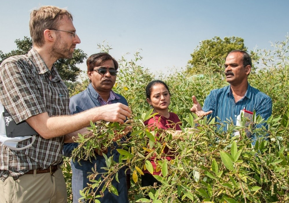 Scientists examine the long shoots of the newly developed pigeonpea lines at the Regional Agricultural Research Station in Warangal. PC: Michael Major/Crop Trust