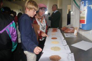 Seed samples of ICRISAT mandate crops Photo: ICRISAT Bulawayo