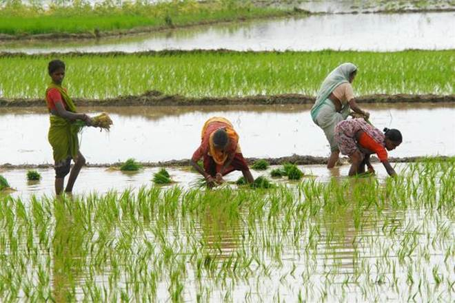 According to the study published in the journal Science Advances, India will need to feed approximately 394 million more people by 2050. (Photo: PTI)