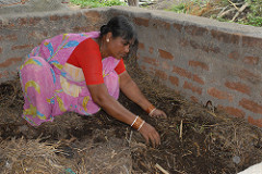 Recycling farm waste through vermicomposting to enrich the farm soils at Kothapally model watershed, Talangana State, India. Photo, ICRISAT