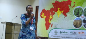 Dr Clare Mukankusi from CIAT presenting PIP for Common Bean - ESA. Photo: ICRISAT
