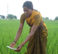 Farmers are beginning to adopt digital technologies. Photo: ICRISAT