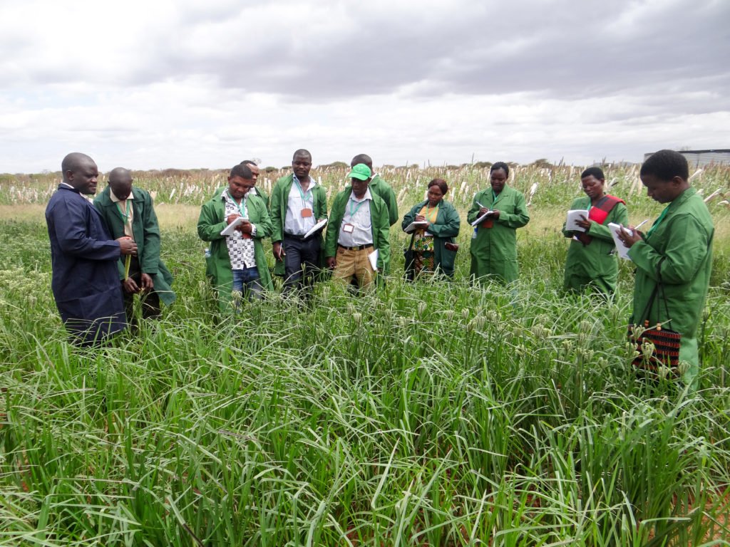 Participants in the field during the training. Photo: ICRISAT