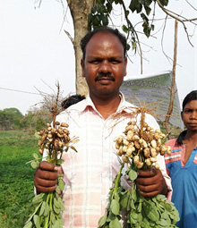 Mr KC Sahoo, with Devi variety in his left hand and off-type in other hand. Photos: Janila P, ICRISAT