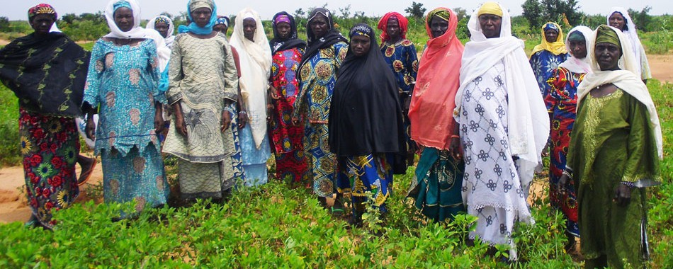 Women groundnut seed producers in Niger.