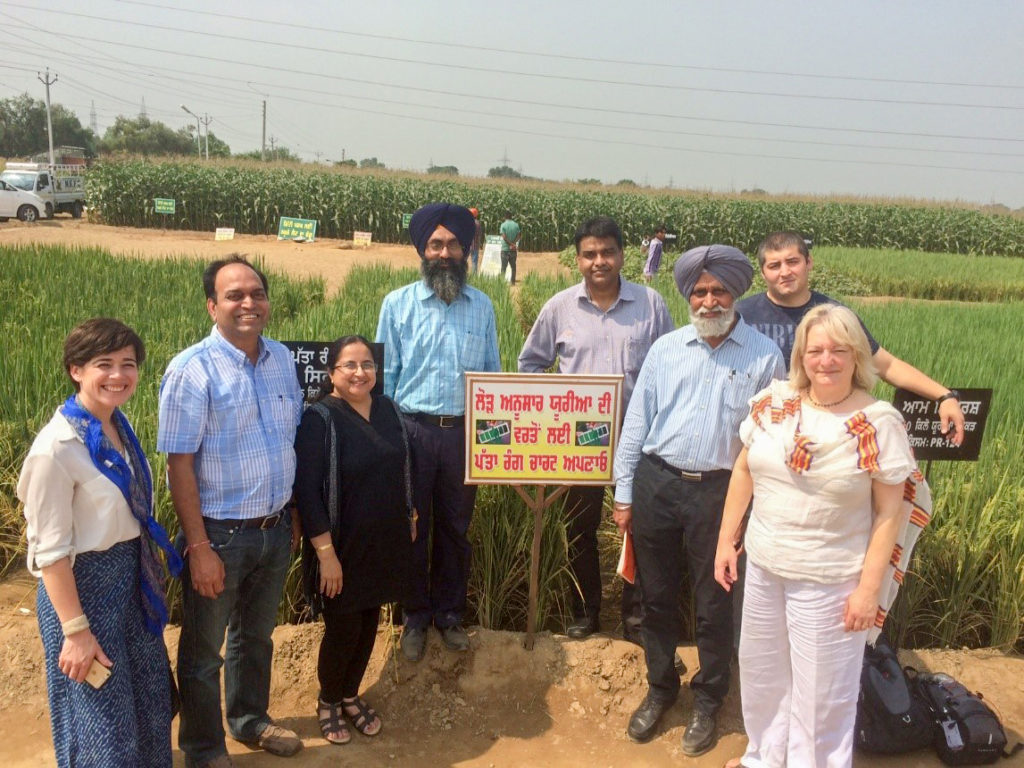 The CINTRIN team with other officials at a demonstration plot at PAU. Photo: ICRISAT