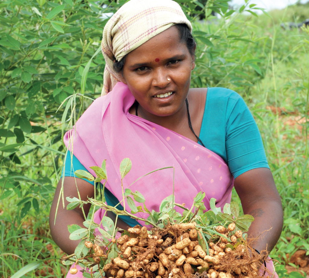 groundnut-crop-improvement