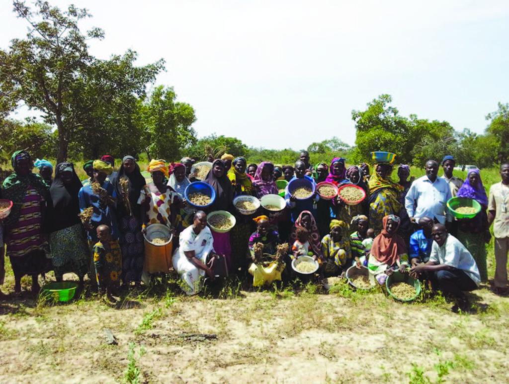 increasinggroundnutproductivityofsmallholderfarmersinghanamaliandnigeria-160503103750