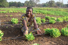 Diversification is the key in African Market Gardens