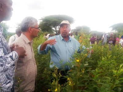 Dr Said Slim sharing pigeonpea production skills. Photo: Wills Munthali