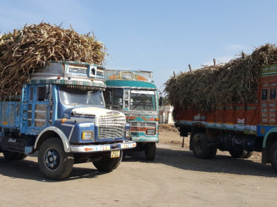 Sweet sorghum stalks being transported to sugar mills. Photo: A Ashok Kumar, ICRISAT