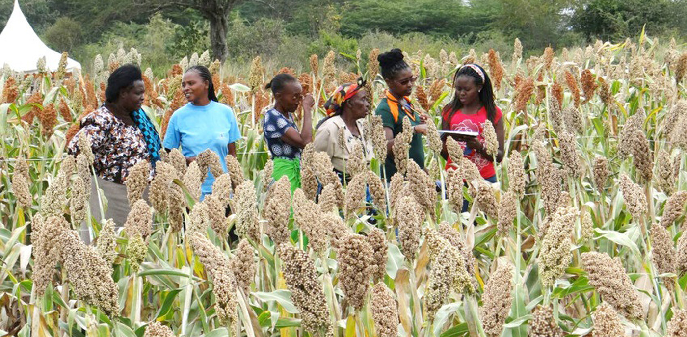 Farmers attend a sorghum field day in Kiboko, Kenya, conducted for the Sorghum for Multiple Uses (SMU) value chains in Kenya and Tanzania project. Photo: ICRISAT, file photo