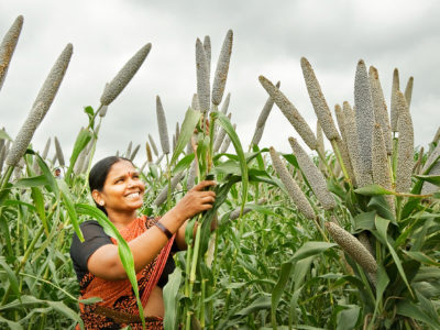 Millets are rich in micronutrients like iron, zinc and folic acid and ideal to combat hidden hunger. Photo: Rao PS, ICRISAT