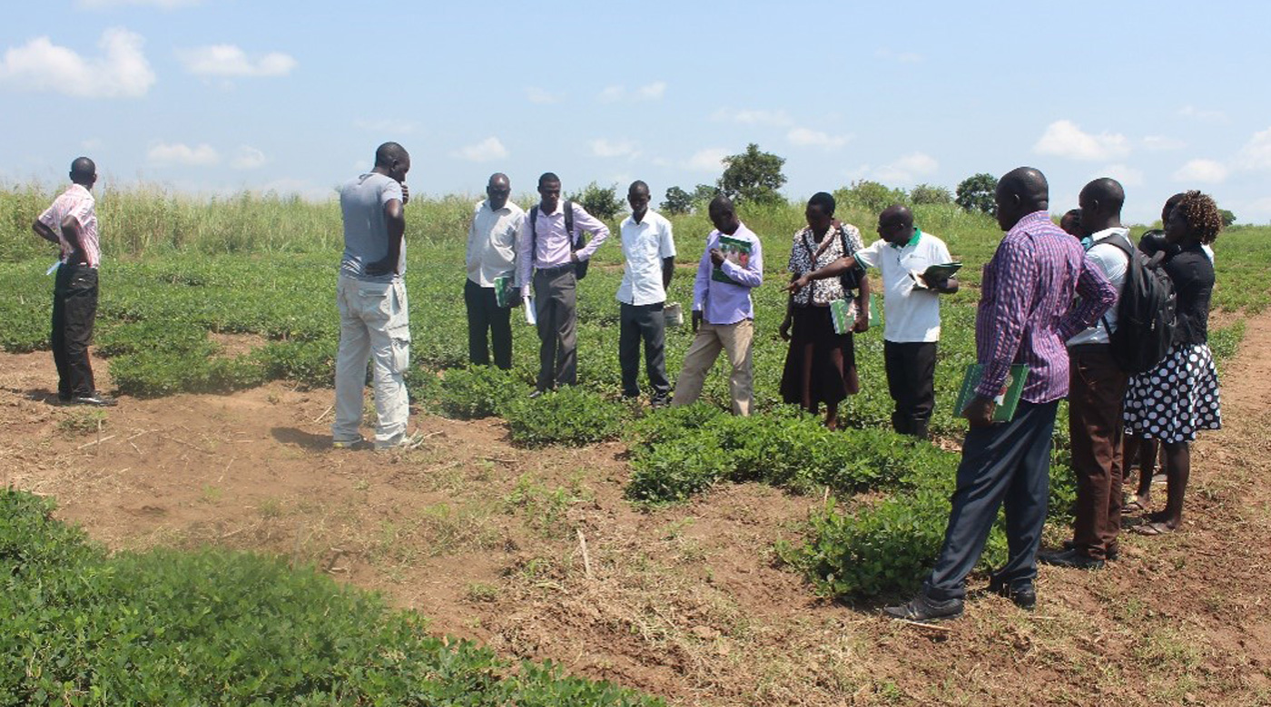 Participants being trained at the groundnut nursery field. Photo: ICRISAT