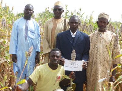 Abdullahi Shehu (standing second from right) with other farmers interested in experimenting with the improved variety CF35.5.