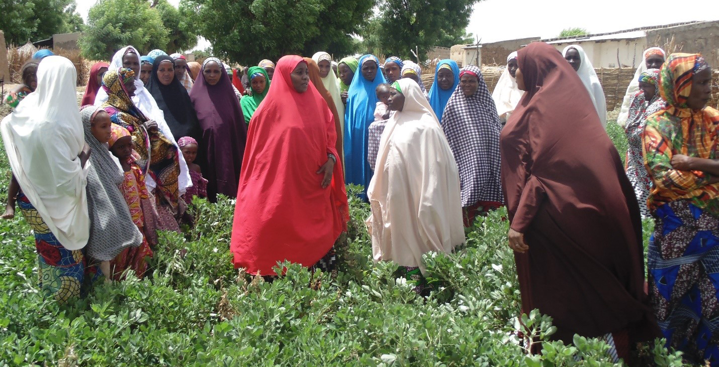 Women touring the groundnut farm during a field visit in Sokoto state. PC: Bala Lawal