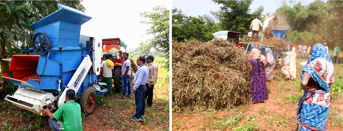 Groundnut threshers could help tackle labor scarcity in Odisha. Photos: P Janila, ICRISAT