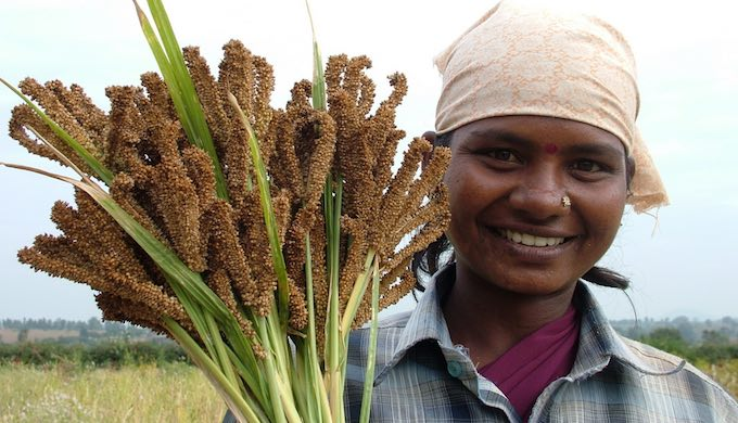 A farmer displays Finger Millet growing on her farm (Photo by Sahaja Samruddha)