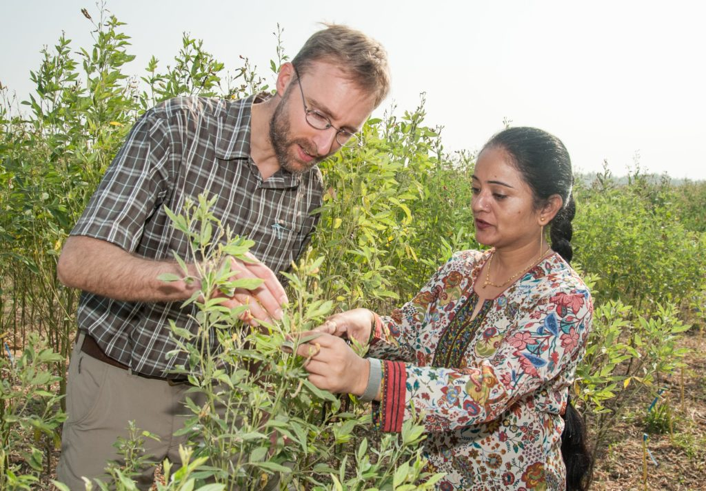 Dr. Benjamin Kilian of the Crop Trust and ICRISAT's Dr. Shivali Sharma monitor a pigeonpea pre-breeding trial on the ICRISAT campus. Photo: Michael Major/Crop Trust